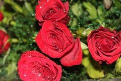 Rosorna i en bukett royaltyfri bild