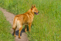 Сross-breed dog in spring grass Royalty Free Stock Images