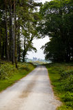 Ross castle at the end of a killarney forestry path Royalty Free Stock Photos