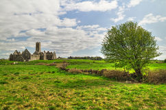 Ross Errilly Friary op weide Stock Afbeelding
