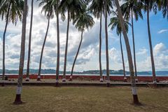 Ross Island, Andamans, India. Andamans, India. tall palm trees against cloudy sky. Palm grove on Ross island Andaman and Nicobar Islands royalty free stock image