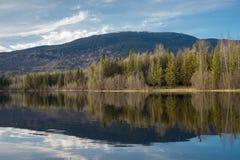 Ross Lake Forest Reflection arkivfoto