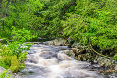 Rosseau River Scene Royalty Free Stock Images