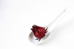 Rosselle Fruit. Hibiscus sabdariffa or roselle fruits isolated on white background stock image