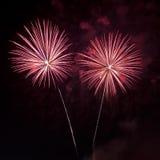 Rossi carmini dei fuochi d'artificio Immagini Stock Libere da Diritti