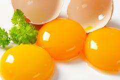 Rossi d'uovo crudi Fotografia Stock