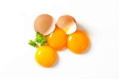 Rossi d'uovo crudi Immagini Stock