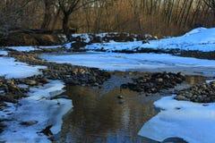 Rossii Russkiy las las budzi w wiośnie Rzeka zakrywa z lodem zdjęcia stock