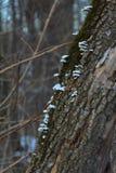 Rossiya Лес Russkiy, картины pryodnye, картины природы сплетя ветви, хлысты Стоковое Изображение