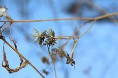 Rossiya Лес Russkiy, картины pryodnye, картины природы сплетя ветви, хлысты Стоковое Изображение RF