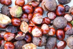 Rosskastanien oder Aesculus hippocastanum Lizenzfreie Stockbilder