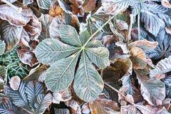 Rosskastanien oder Aesculus hippocastanum Fallblätter Lizenzfreies Stockbild