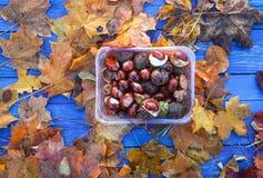 Rosskastanien oder Aesculus hippocastanum Früchte Lizenzfreies Stockbild