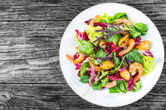 沙拉用大虾,淡菜,莴苣离开,菠菜,芝麻菜,拉迪基奥rosso 免版税库存照片