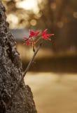Rosso-acceso Fotografie Stock Libere da Diritti