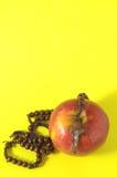 Rosso Apple del peccato di Eva della bibbia Fotografia Stock Libera da Diritti