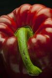 Rosso-Campana-pepe Fotografia Stock