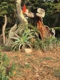 Rosso contro rosso; il rosso di una pianta di Vera dell'aloe ed il rosso della corteccia di albero nuda Immagine Stock