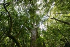 Rosso Cypress di Taiwan Immagini Stock Libere da Diritti