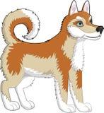 Rosso del husky del cane Fotografia Stock