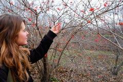 Rosso della cenere di montagna Fotografia Stock Libera da Diritti