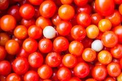 Rosso della melanzana Immagine Stock Libera da Diritti