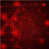 Rosso della struttura dell'occhio Fotografie Stock