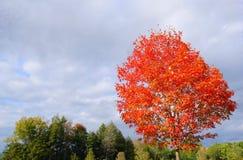 Rosso di autunno Fotografia Stock