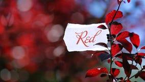 Rosso di colore in natura Fotografia Stock Libera da Diritti