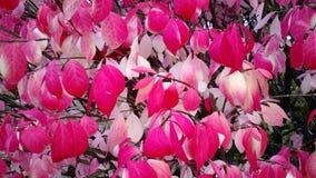 Rosso e Pale Yellow Leaves immagini stock libere da diritti