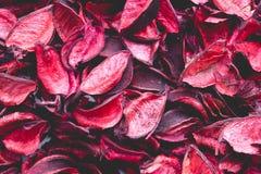 Rosso ed arancia Fotografia Stock