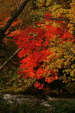 Rosso viene fuoco Imagen de archivo libre de regalías