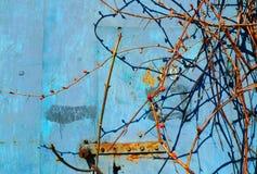 Rost auf blauem altem gemaltem Metall Frühlingsweinstock mit Nieren stockfoto