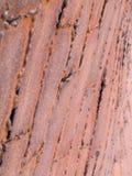 Rostad abstrakt begrepp - belägga med metall pläterar Royaltyfri Fotografi