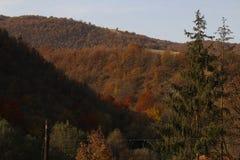 Rostad skog på kullarna i höstsolnedgång Royaltyfri Foto