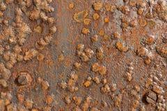 Rostad textur och bakgrund för visning för järnmetallyttersida. Arkivfoto