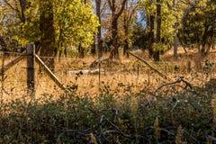 Rostat gammalt trä och försett med en hulling - trådstaket som försvinner in i avstånd, royaltyfria foton