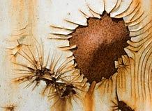 rostig blomma royaltyfri bild