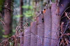 Rostig järnstaketpanel i skogen Arkivbilder