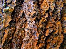 Rostig lav på skället av det gamla trädet Arkivfoto