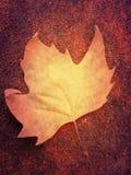Rostig leaf arkivfoto