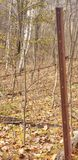 Rostig taggtråd i skogen arkivbild