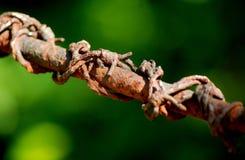 Rostig taggtråd i trädgården fotografering för bildbyråer