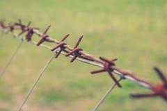 Rostiga den försåg med en hulling taggtrådmakroen - - binda closeupen Royaltyfria Foton