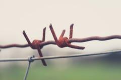 Rostiga den försåg med en hulling taggtrådmakroen - - binda closeupen Fotografering för Bildbyråer