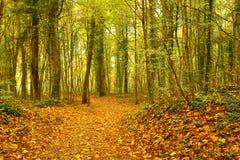 Rostiga sidor i hösten Arkivfoto