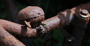 Rostige alte Fahrradglocke Stockfotos