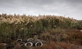 Rostige benutzte Fahrzeugreifen schafften ab und schufen Klima-pollut Stockfoto
