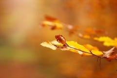 Rostige lokalisierte Urlaubnahaufnahme des Herbstes Lizenzfreies Stockbild