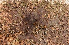 Rostige Platte Stockbild
